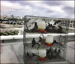 Plano Bird Control